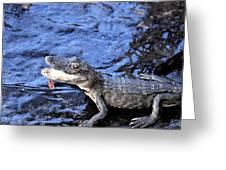 Little Gator Greeting Card
