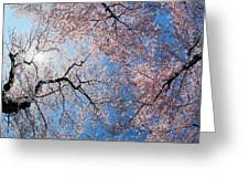 Low Angle View Of Cherry Blossom Trees Greeting Card