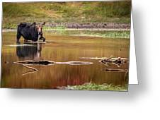 Moose At Green Pond Greeting Card