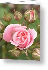 Pink Rose, International Rose Test Greeting Card