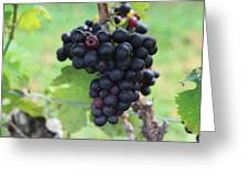 Purple Grape Bunches 17 Greeting Card