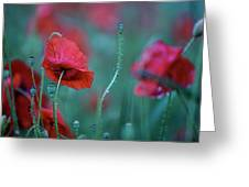 Red Corn Poppy Flowers Greeting Card