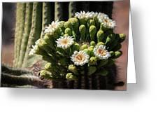 Saguaro Blossoms  Greeting Card