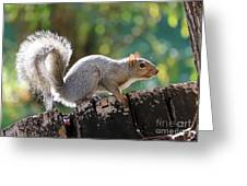 Squirrel Friend Greeting Card