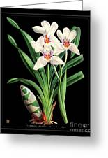 Vintage Orchid Print On Black Paperboard Greeting Card