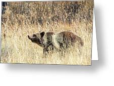 Grizzly Bear Greeting Card by Michael Chatt
