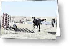 3 Mules Greeting Card