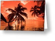 Palm Trees At Sunset, Moorea, Tahiti Greeting Card
