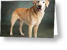 Portrait Of A Labrador Mixed Dog Greeting Card