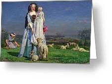 Pretty Baa-lambs Greeting Card