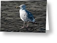 Seagull On Beach Greeting Card
