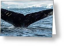 Whale In The Ocean, Southern Ocean Greeting Card