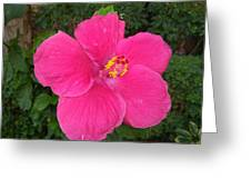 Bright Pink Hibiscus Greeting Card