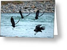 4 Crows At The River Greeting Card by Mary Lee Dereske
