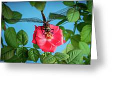Dragonfly On A Flower Of A Red Rose. Macro Photo Greeting Card