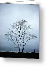 Moody Winter Landscape Image Of Skeletal Trees In Peak District  Greeting Card