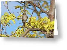 Willow Flycatcher Greeting Card