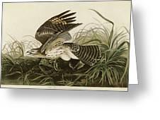 Winter Hawk  Greeting Card