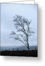 Moody Winter Landscape Image Of Skeletal Trees In Peak District  Greeting Card