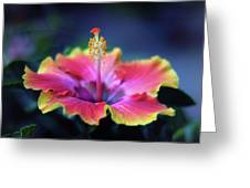 Hibiscus Delight Greeting Card