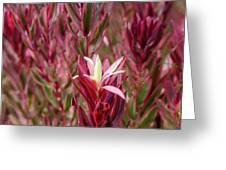 Kirstenbosch National Botanical Garden Greeting Card by Rob Huntley