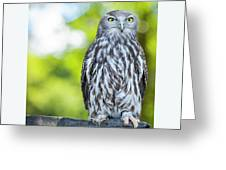 Barking Owl Greeting Card by Rob D Imagery