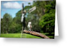 Beautiful Barn Owl Greeting Card by Rob D Imagery