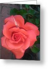 Orange Rose Greeting Card