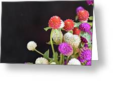 7191-multicolor Greeting Card