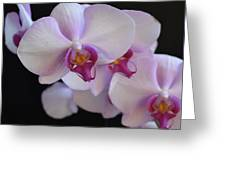 7195-orchids Greeting Card