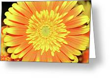 7289-yelow Gerber Greeting Card