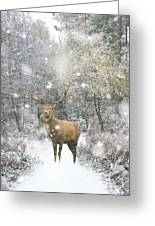Beautiful Red Deer Stag In Snow Covered Festive Season Winter Fo Greeting Card