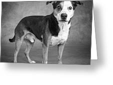 Portrait Of A Mixed Dog Greeting Card