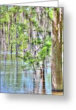 A Beautiful Day In The Bayou Greeting Card