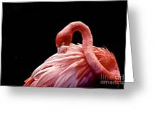 A Beautiful Flamingo Cleaning Its Greeting Card