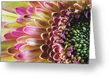 A Burst Of Spring Greeting Card by Laura Roberts