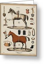 A Chromolithograph Of Horses With Antique Horseback Riding Equipments   1890  Greeting Card