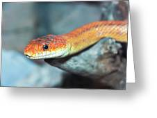 A Close Up Of A Ground Snake Greeting Card