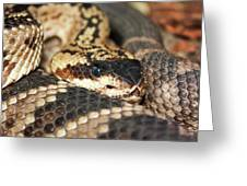 A Close Up Of A Mojave Rattlesnake Greeting Card