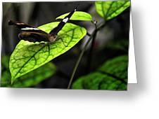 A Defiant Butterfly Greeting Card by Gerlinde Keating - Galleria GK Keating Associates Inc