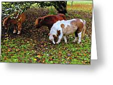A Herd In 15 Feet Greeting Card