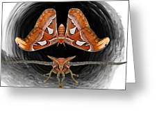 A Is For Atlas Moth Greeting Card