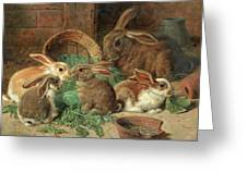 A Mother Rabbit And Her Young Greeting Card