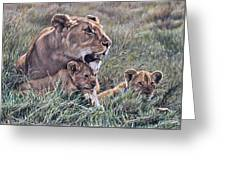 A Quiet Moment Lioness And Lion Cubs Greeting Card by Alan M Hunt