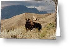 A Really Big Moose Greeting Card