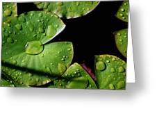 A Red Leaf Among The Water Lily Pads Greeting Card