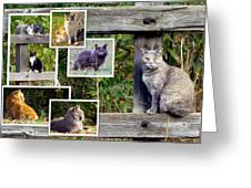 A Variety Of Cats Greeting Card