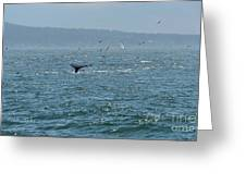 A Whale's Tail Above Water With Sail Boat In The Background Greeting Card