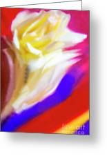 A White Rose In An Abstract Style. Greeting Card