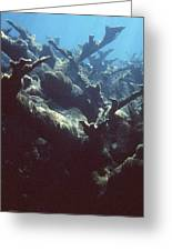 Acropora Coral Greeting Card
